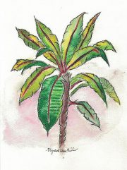palm-tree-betty-ann-quirino-notecard